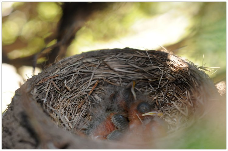 Baby birds sleeping