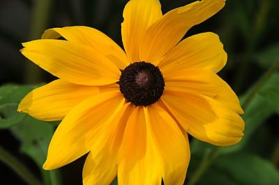 Yellow brown flower