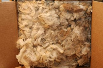 Morrit Merino fleece