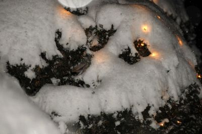 Lights on the snowy bushes