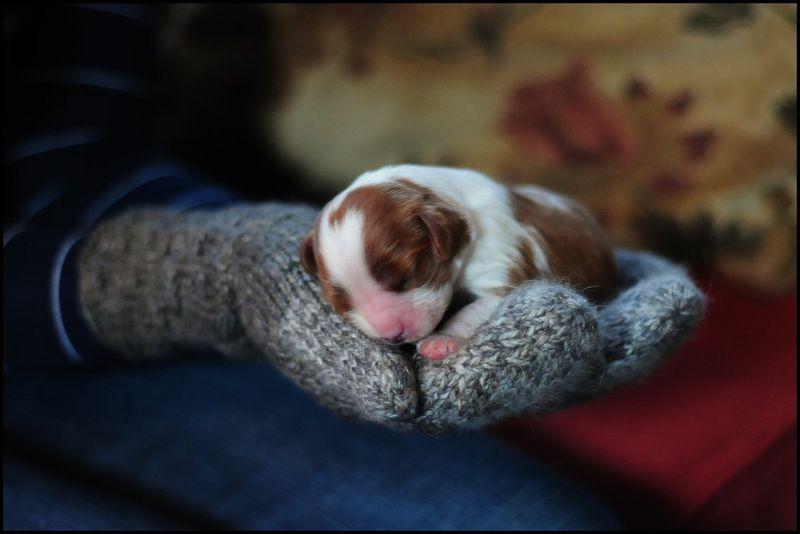 Puppy_Hannah