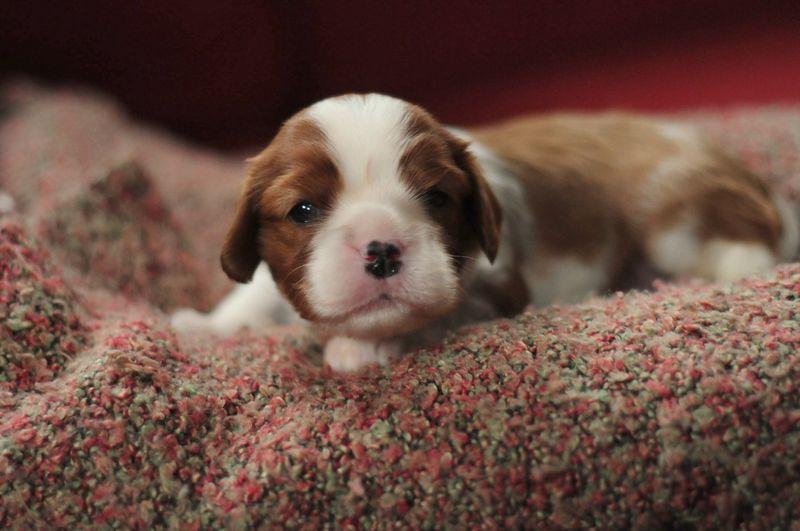 3wk Puppy1