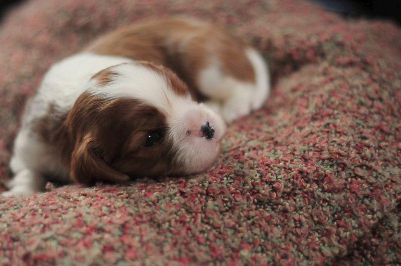 3wk puppy4