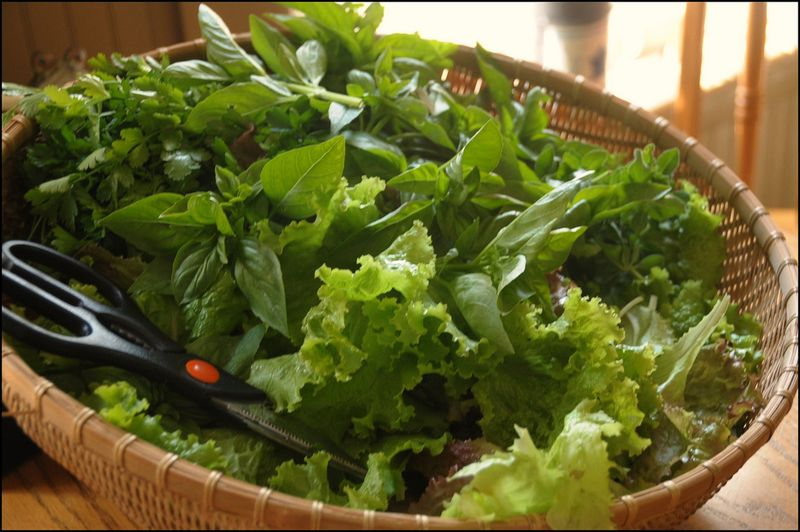 Basket of greens 2010