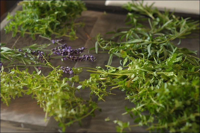 Herbs on screen