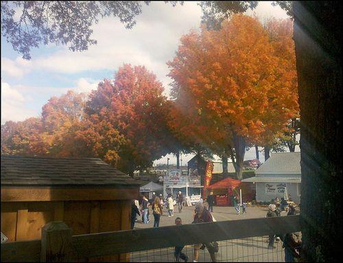 Rhinebeck trees