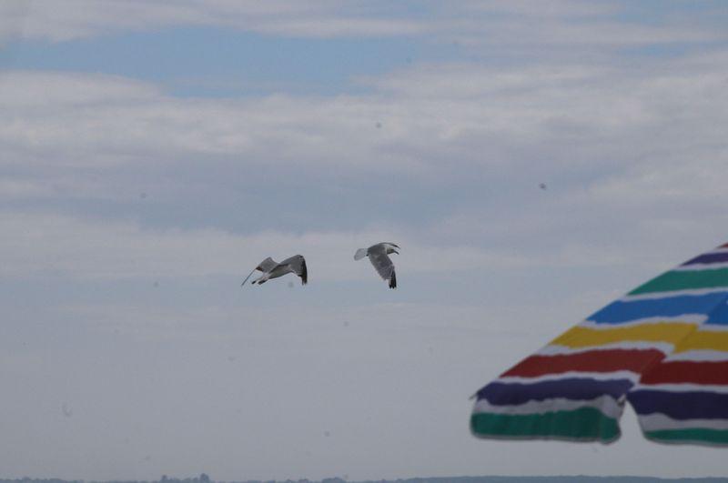 Beachgulls