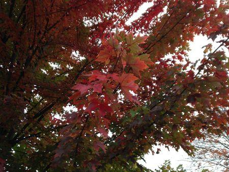 Redgreenfoliage