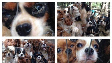 Terris_dogs