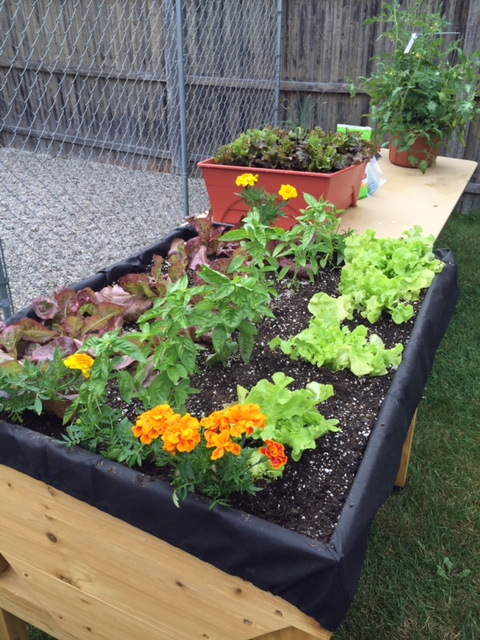 Lettucebed
