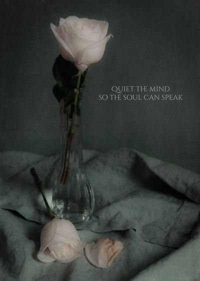 Quiet_small