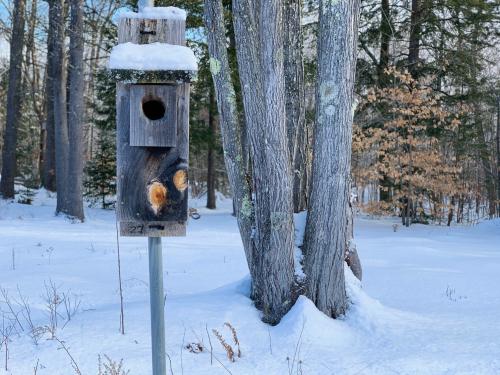 Birdbox