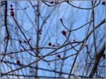 Treebuds_2