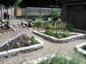 Lower_garden_061806_1