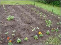 Planted_garden