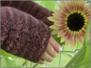 Mitts_sunflower_3