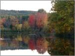 Pond_foliage