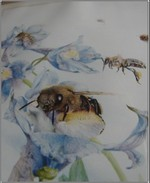 Bee_picture_3