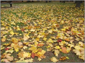 Floor_of_leaves