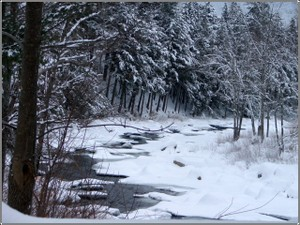 Winter_wildcat_river