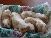 3wkpupsleep