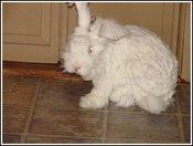 Bunnyfloorcute_1