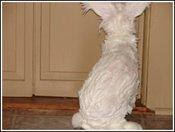 Bunnystanding_1
