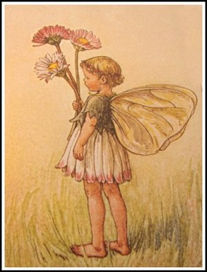 Daisy_fairy_1