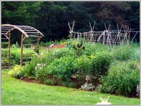 Michelle_garden