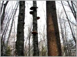 Musrooms_tree_3