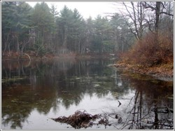 Pond_full_picture_2