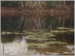 Pond_rain2_1
