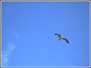 Seagull_3