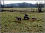 Sheep_pasture