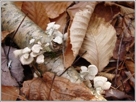 Small_mushrooms_5