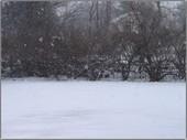 Snowing_1