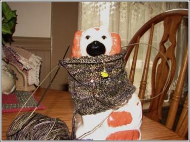 Sockdog_1