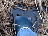Swamp_foot